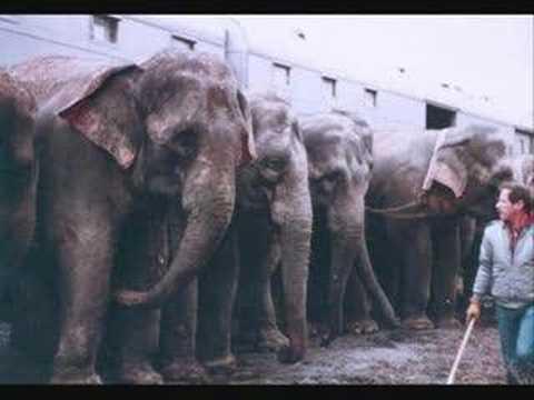 elephant abuse circus