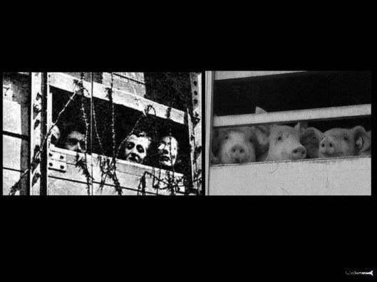 holocaustvictims and pig victims