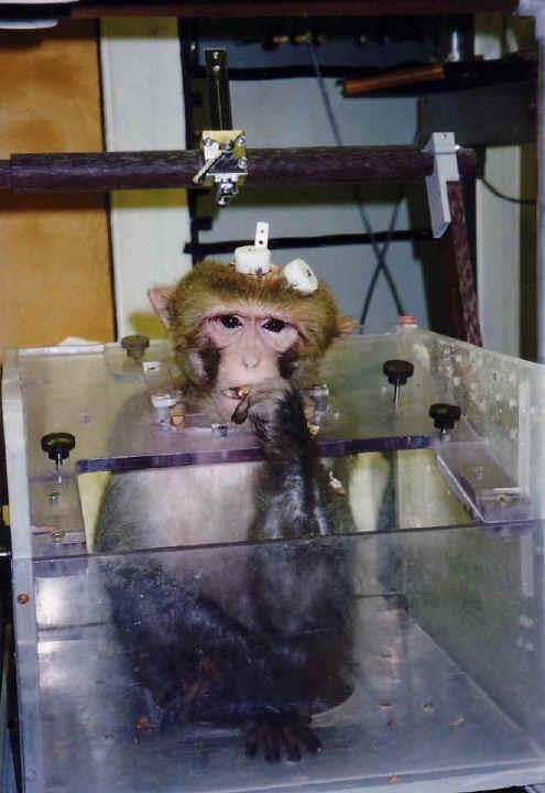 monkey seattle
