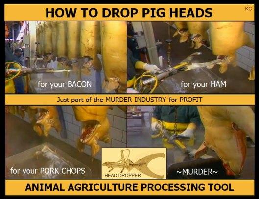 pigs head dropper